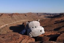 "The Adventures of Hippowana / Follow the official Gondwana Mascot ""Hippowana"" on its adventures across the country!"