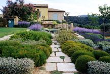 Lavender and grasses garden