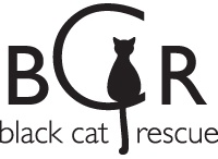 Black Cats / There are too many bad myths about black cats and none of them are true. Black cats rock!