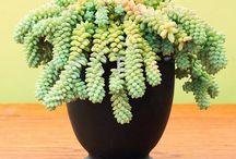 İnddoor plants