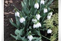 Spring/Primavara