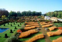 Grasses / Architecture Gardens