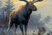 luonto eläimet