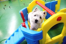 Our Dogs! / Check out what these four legged friends get up to during their customised holiday!