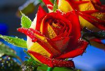blooming beauties