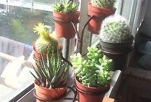 Cactus etc