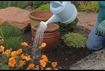 Flower Gardening / Flower Gardening Videos