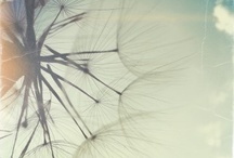 Weeds to Wish for.. / by Amber Smith