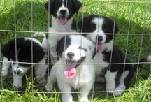 Stinking Cute Puppies in Rescue / Happiness is a warm puppy.  ~Charles M. Schulz Here is a collection of some of our stinking cute puppies!