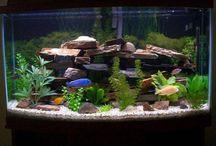 Future Fish Tank