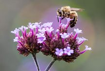 Save Our Bees / If bees are so important to our ecosystem and economy, why are we letting them die?  TakePart.com is launching a year-long campaign dedicated to the health, well-being and restoration of the bee population. Take Action with us!