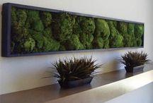 Mech rośliny na ścianie