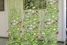 lindos jardins
