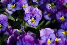 Цветы, растения, грибы.