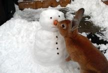 Winter Loverlies