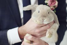Pets at your wedding / Your lovely pets can be adorable part of your wedding day.