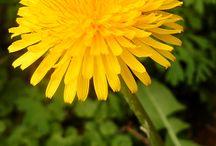 FUNKY Gardening / by Paula Smith