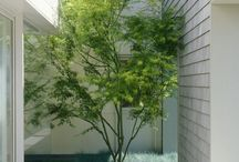 SMALL gardens / Tree ideas for limited garden spaces, courtyards and patios