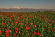 Город весны Алма-Ата