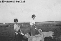 Homesteading -  The Homestead Survival / by The Homestead Survival