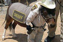 Udklæning hest