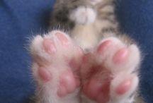 Cute kittens / Pets / by Sydney Contreras