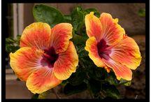 Global Flowers