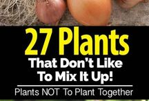 Plants  not to mix it up