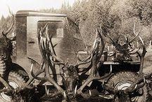 hunting, wild game, food.