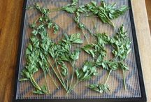 Herbs / by Deana Ridge