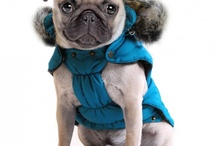 Vêtements pour l'hiver