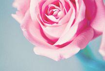 rose.rose