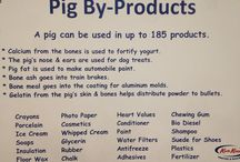 Pig education