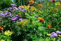 Debbie's Gardens