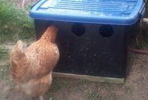 Chicken coop stuff