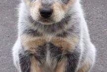 Mi sueño de perro