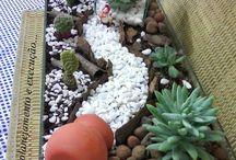 Truhlíky - kaktusy
