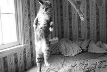 Gattini & animali