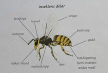 Insekter och småkryp
