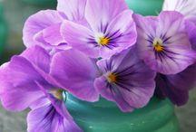 Easter / by Jennifer Mead