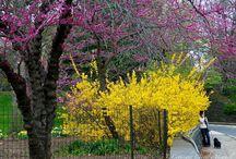 Central Park / Park