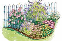 Landscape & Garden Ideas