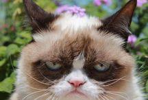 Grumpy cat be the bomb