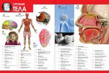 Занимательная анатомия