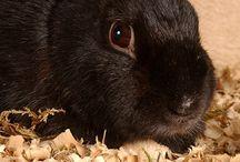 Roditori: conigli nani, porcellini d'India, criceti, cincilla' e altri roditori! Il loro mondo e' il nostro mondo! / Qualche informazione sui roditori e su come nutrirli al meglio e prendersene cura con i nostri prodotti!