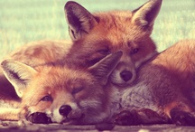 Foxes / by Jodi Willoughby