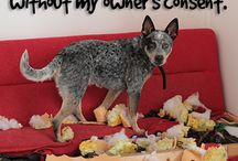 Pet Shaming / We all know they're capable of the best, most gush-worthy, charming behavior, but sometimes our pets don't live up to their poised potential. Thanks to you, we've caught them red-handed. Enjoy. / by Pet Supplies Plus