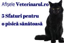 Afise pentru cabinetele veterinare / Afise realizate de Echipa Revistei Veterinarul pentru medicii veterinari romani. Ele pot fi descarcate saptamanal de pe website-ul business.veterinarul.ro.