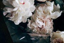 vintage / foto,oggetti fiori,