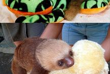 Zvířata a nehty